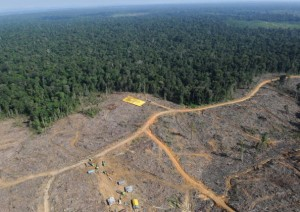 foto- denuncia di Greenpeace contro la deforestazione
