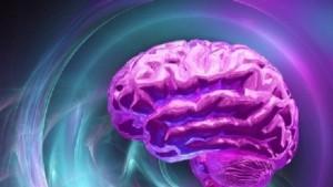 mini cervello 3d